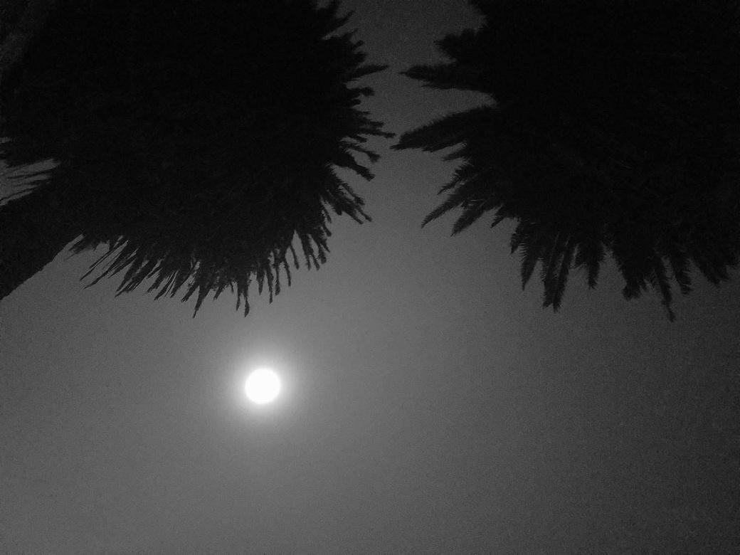 palmeras de noche.jpg
